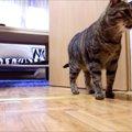 二重人格?!大人しい猫とやんちゃな猫
