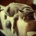 猫はジメジメが嫌い!梅雨の時期に出来る対策
