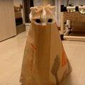 ひょっこりと表れるお顔が可愛い!紙袋で遊ぶ猫