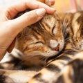 怖がっている猫を安心させる8つの対処法