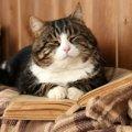 愛猫とより長く一緒に過ごしたい!ご長寿の秘訣11選