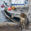瀬戸内にある猫とアートの島「直島」の魅力