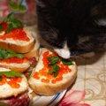 猫がイクラを食べるのは大丈夫?食べた時の対処法