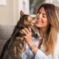 猫と人間が『共有するのはNG』なもの4つ