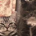 『猫バンバン』だけで大丈夫?車に乗る前に確認するべきこと3つ
