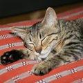 猫柄の座布団可愛い商品6選