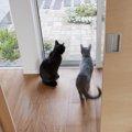 室内飼いしている猫同士でも縄張りはある?一緒に暮らす時注意したい事