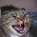 猫がキレる5つの理由