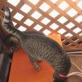 これからの季節は網戸にしたい!猫の脱走防止のために網戸に柵を作っ…