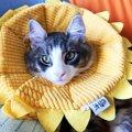 Laylaの12猫占い 9/9~9/15までのあなたと猫ちゃんの運勢