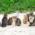 毛色の種類で違う猫の性格、意外と知らない猫の豆知識