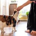 猫とのコミュニケーションに!クリッカートレーニングの方法