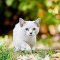 猫が脱走した時にやるべき6つの行動