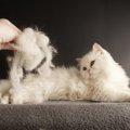 猫の毛が抜ける病気4つの原因や治療法
