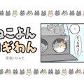 ねこよんコギわん【第45話】「ねこホイホイ」