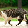 猫がしっぽを下げている時の心理4選!体調が悪い可能性も…?