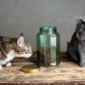猫の流動食の選び方と与え方について