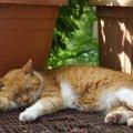 猫の熱中症対策!暑い夏を乗り切ろう!