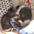 子猫を飼うなら『2匹一緒』が猫にとっても、飼い主にとってもおすすめ
