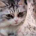 めずらしく遊びにノッてくれたツンデレな姫猫ちゃん!
