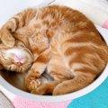 猫を初めて迎えた人が『驚くこと』ランキングTOP4