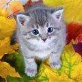 猫がする『秋を迎える準備』5つ!飼い主がサポートすべきことは?