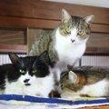【福岡県 古河市】古民家でのんびり猫と触れ合える「古民家Cafe Gatt…
