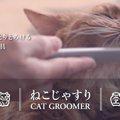 ねこじゃすりで猫をうっとりさせちゃおう!商品情報と使い方