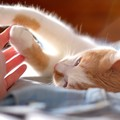 【新型コロナ研究結果】猫から猫への感染を確認