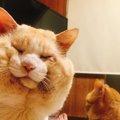 お月様もお饅頭もざわつく?ふくよかな丸顔猫の輪郭がレアと話題