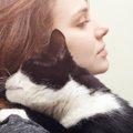 猫が飼い主にべったりする4つの理由