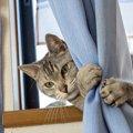 猫が『撫でて欲しくない』タイミング7選!飼い主が注意すべき状況やサ…