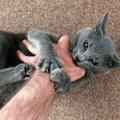 猫がケリケリ!キックする3つの理由と対処法