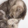 知らないうちに…猫の『寿命を縮める』NG行動5つ