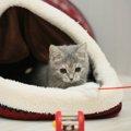 猫が大好きなおもちゃ猫じゃらし!選び方とおすすめ商品