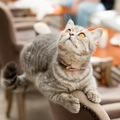 神戸の猫カフェまとめ!保護猫の里親になれる店舗まで