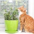 愛猫が観葉植物を食べちゃう!?注意点と対策