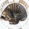 猫が『丸まって寝る』心理3選!ニャンモナイト状態で眠るには理由が…
