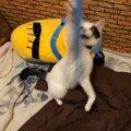 猫がロールスクリーンで遊ぶから壊れる…対処出来る4つの事