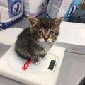 母猫に見捨てられた子猫、感染症で失明寸前のところを救出される!