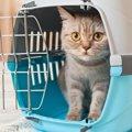 猫はどうして病院に連れて行かれる事がわかるの?4つの理由