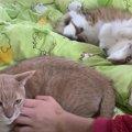 「僕も撫でて!」手を上げて立候補する猫ちゃん♡