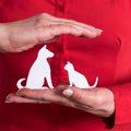 猫のペット保険の基礎知識と注意事項とは