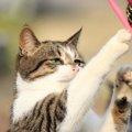 猫パンチの威力とその意味とは
