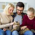 愛猫が家族にもたらす6つの幸せ