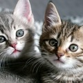 猫の中毒の症状や原因、その対処法と治療