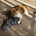 猫が飼い主さんの「ために」してくれること3つ