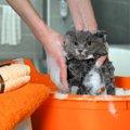 猫のお風呂はどう入れる?必要な時と嫌がる場合の対策について