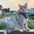 LAYLAの12猫占い【6/15〜6/21】のあなたと猫ちゃんの運勢