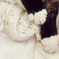 猫の靴下が白色だけな理由とは